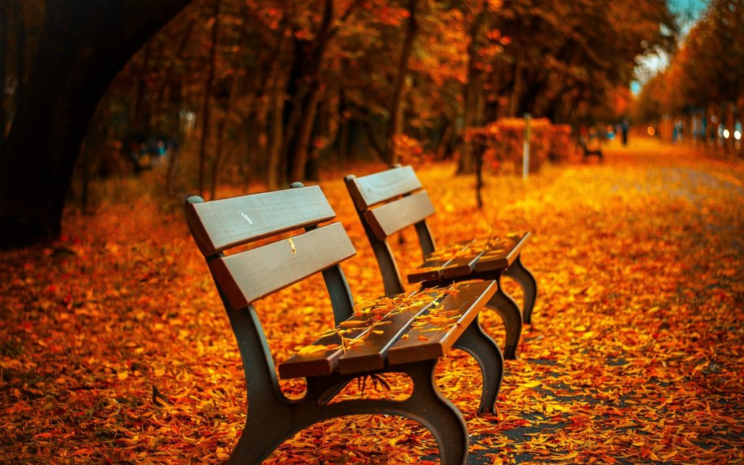 Encouraging Workplace Safety – Essential Tips for the Autumn Season